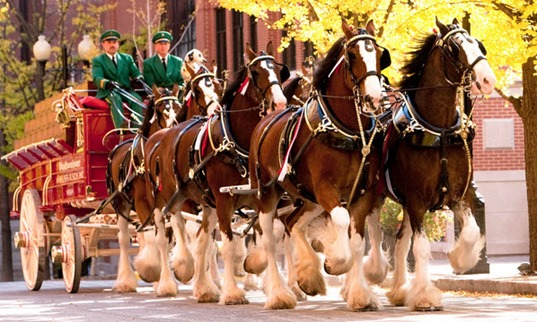 Colabria Horses