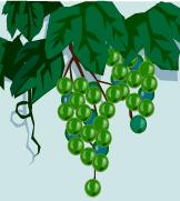 Colabria vines